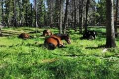 Pferdekoppel-im-Camp-01