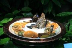 Botanischer-Garten-Schmetterlinge