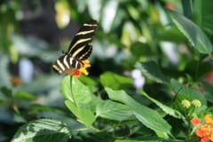Botanischer-Garten-Schmetterlinge2