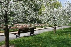Jardin-botanique-printemps