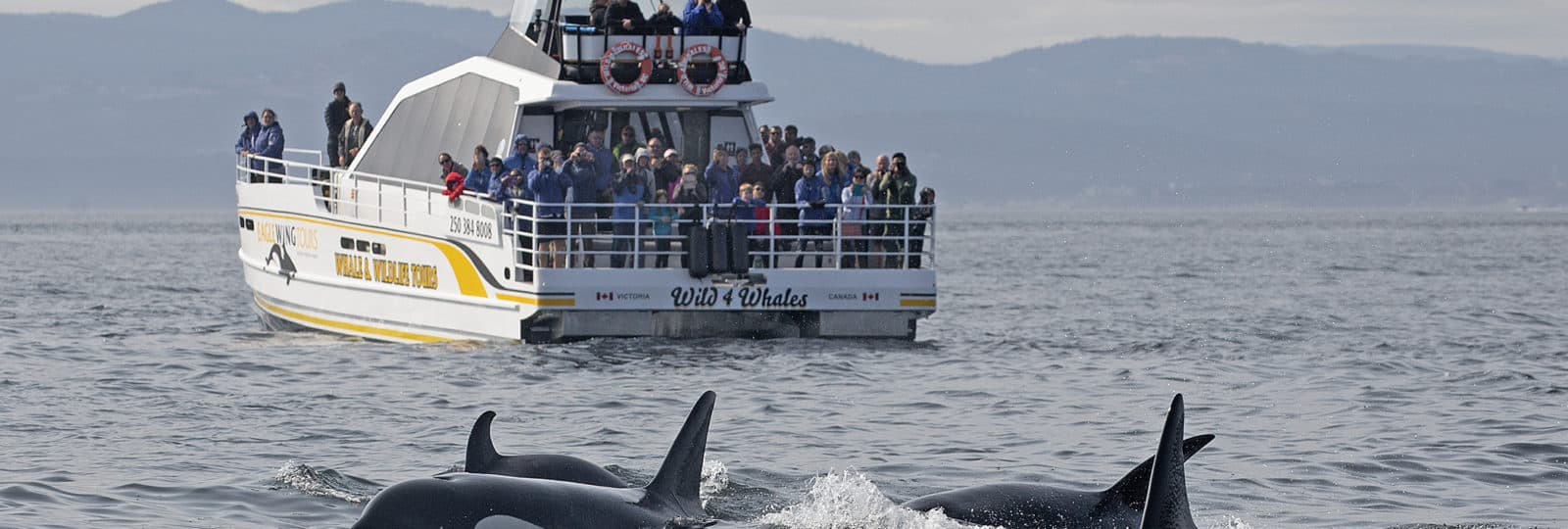 Sunset Whale Watching & Wildlife Tour