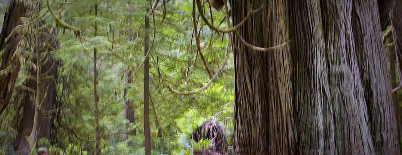Pacific Rim Park-Vancouver Island